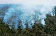 Forte hausse de la destruction de la forêt vierge tropicale en 2020