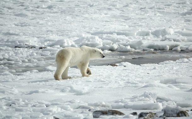 Aux abords du pôle Nord, la glace témoin et victime du réchauffement climatique